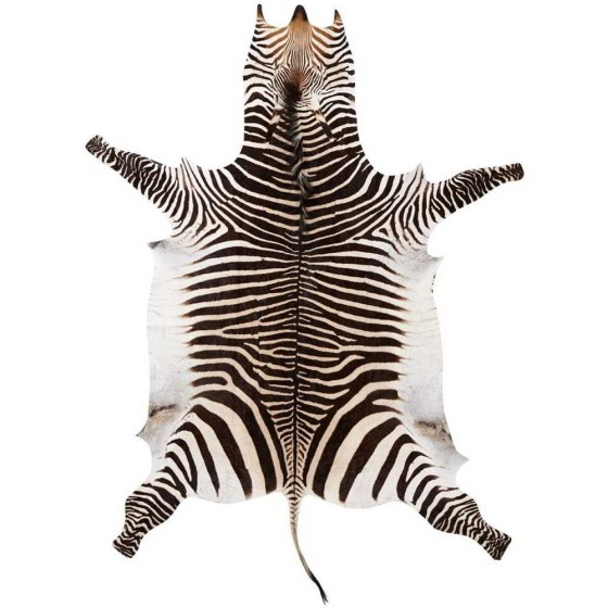 NATURES COLLECTION - SOUTH AFRICAN ZEBRA HIDE